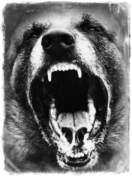 Agressive dogrr