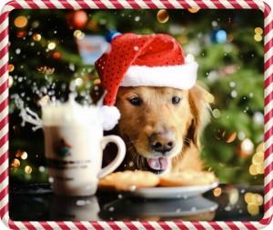 christmas-dog-wallpaper