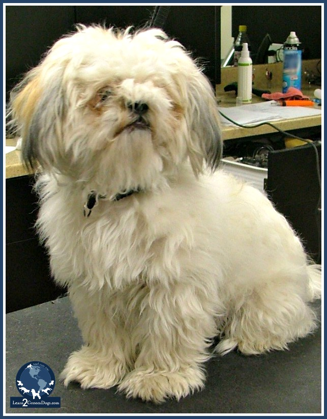 3 Options For Clients With Matted Dogs Learn2groomdogs